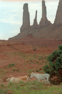 Monument Valley 330